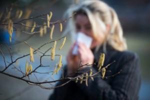 Låt Ai göra framtidens pollenmätningar