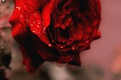 Skicka in Dagens ros