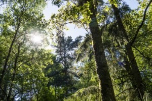 Ökad äganderätt i skog kan få katastrofala konsekvenser