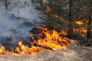 Efter bränderna – kusten kan få eldningsförbud