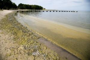 """Algblomningen utanför öns kust – senaste lägesrapporten: """"Kan sprida sig"""""""