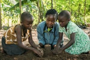 Pappersprospekt blir träd i Afrika