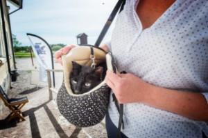 """Nya regler att hålla koll på för kattägare: """"Kommer göra stor skillnad"""""""