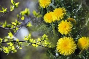 Så var maj – enligt familjen Bohnsack på Skurholmen