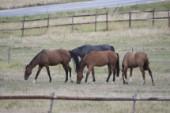 Fyra hästar döda efter virusutbrott