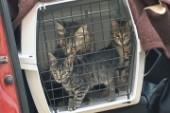 """Kattakuten: """"Nya rutiner försämring för hemlösa katter"""""""