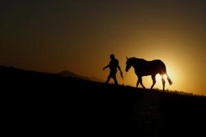 Naturlig hästhälsa eller onaturligt djurplågeri?