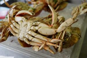 Invasiv kinesisk krabba intar Vänern