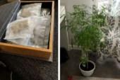 Pensionär i Östergötland odlade narkotika – slipper fängelse
