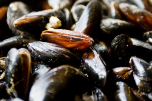 Hotade musslor stoppar brygganläggning