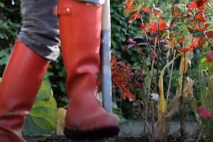 Professor: Därför är trädgårdsarbete nyttigt för dig