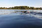 Bildspecial: Lång simtur mellan Luleås broar