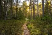 Allt fler skogsägare söker dispens – trots artfynd • Väntetiden växer • Beslutsfattarens råd