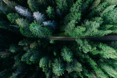 Tät barrskog i Norrland