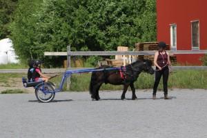 Ny sommar-travskola för barn på Grans
