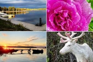 Bildextra läsarnas bilder: Vackra solnedgångar, djur och natur