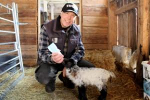 Vårtecken i Vimmerby: Kalvar, lamm och vårfåglar