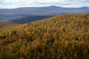 Skogen står stadig – värdet ökar mest i norr