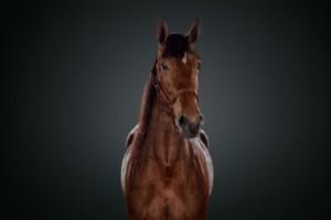 Är det här årets häst i Sverige?