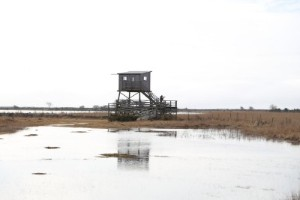 Nu är det högsäsong för fågelskådning på Gotland