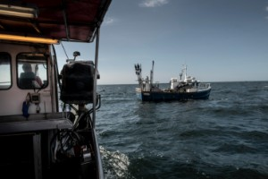 Mer politisk vilja för att rädda fisken i Östersjön