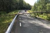 Fallande träd stoppade trafik