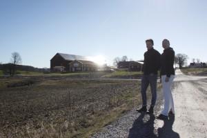 Två hektar solrosor odlas vid Grinda – för självplock