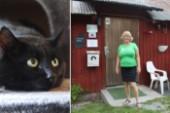 "Ökat intresse på katthemmet: ""Vi har jättefå katter"""