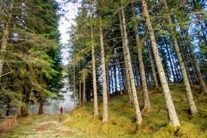 Skogarna är avgörande för att lösa klimatfrågan