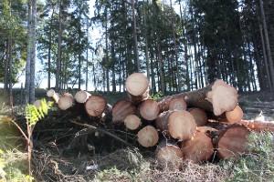 Skogens roll i klimatarbetet