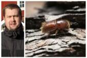 Granbarkborrarna har blivit färre i Västerviksskogarna • Expertens tips: Så gör du livet surt för skadedjuren