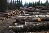 Så stor del förväntas skogsägare spara utan ersättning • Enskilda skogsägare i kläm i väntan på praxis
