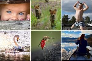Rösta på årets bästa sommarbild – kolla in finalisterna här och gör din röst hörd