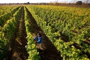Gårdsförsäljning av alkohol skapar jobb på landsbygder