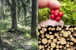 Skogen vi ärvde – reflexioner från Småland