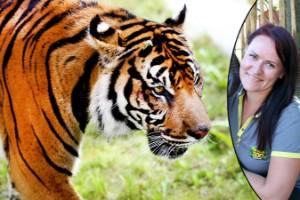 Covid-utbrott bland kattdjur på djurpark – nu ser Parken Zoo över sina rutiner