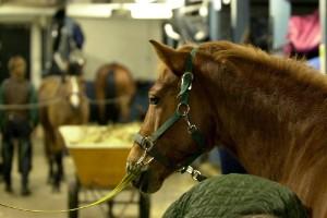 Hästar smittade av kvarka på ridskola i länet