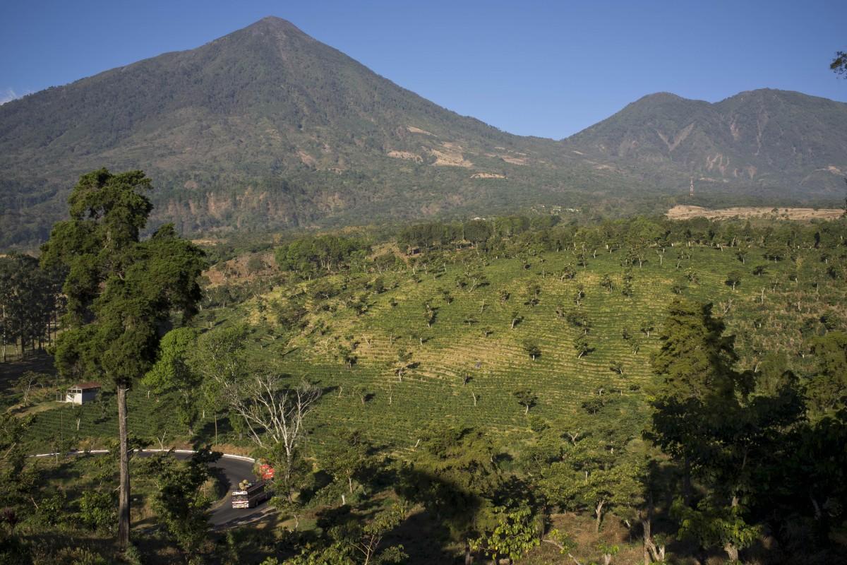Guatemala vill lämna kaffesamarbete