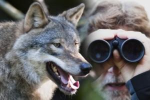 Uppmaningen: Spana efter varg