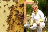 """Följ med in i bikupan: """"Binas värld är ett matriarkat"""""""