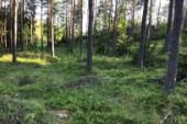 Aktiva skogsägare en garant för mångfalden