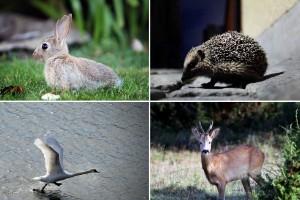 Quiz: Vad kan du om gotländska djur?
