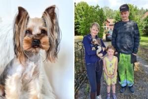 Hunden Lambo rymde – hittades efter stort engagemang