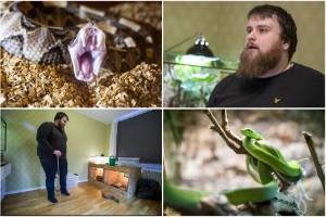 """Ormar är tjusningen i hans liv – bor med över 20 stycken: """"Giftormar är inga nybörjardjur"""""""
