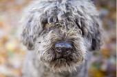 Semestra med din hund på Gotland