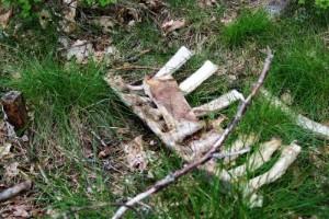 """Döda kalvar dumpades i skogen: """"Otäckt att se"""""""