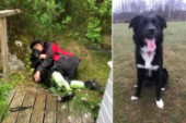 Sökinsats efter skadad hund fick lyckligt slut