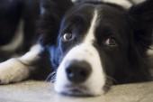 """""""Debatten gäller var hundarna ska göra sina behov"""""""