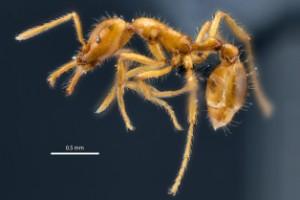 Myra i bräschen för könsneutralitet