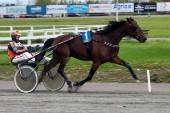 Nöjd Kylin Blom tog flest segerbuketter